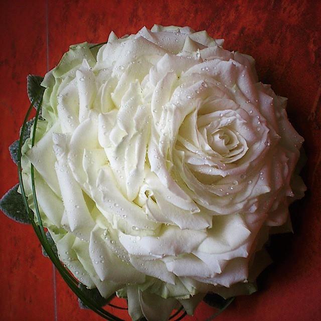 glamélia z lupienkov bielych ruží