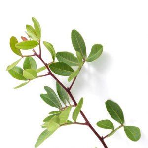 zelená vetvička