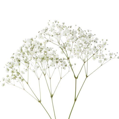 nevestin zavoj gypsomilka, rezany kvet