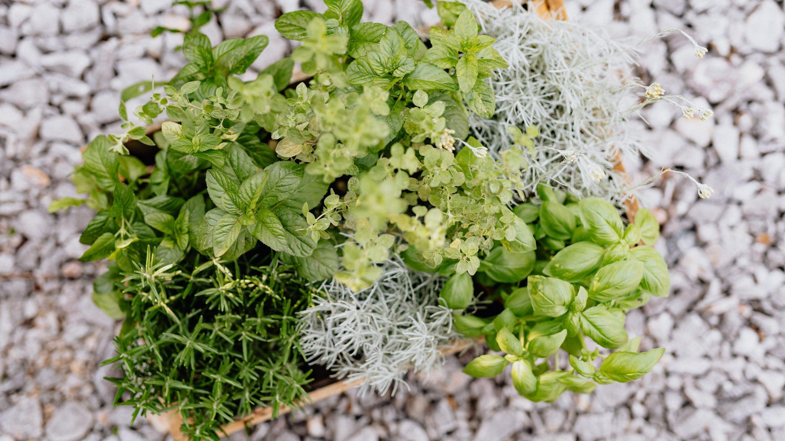 bylinka zahrada v byte, rastliny v kvetinaci