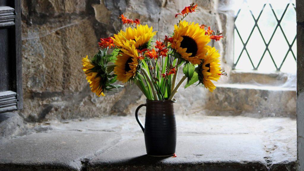 starostlivosť o reané kvety, slnečnice vo váze