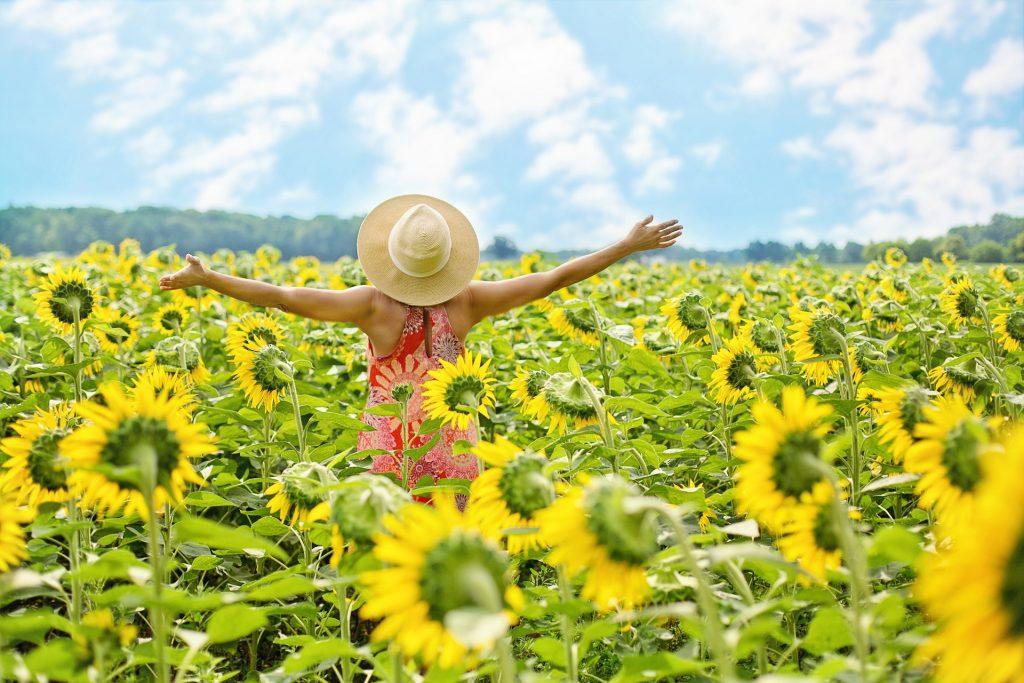 slnečnice žena v poli